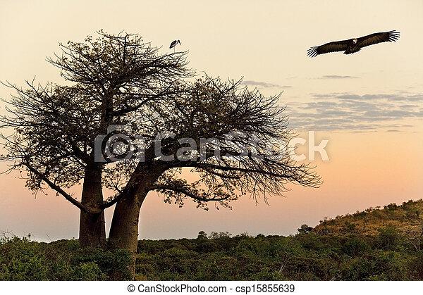 Baobab Tree - Savuti in Botswana - csp15855639