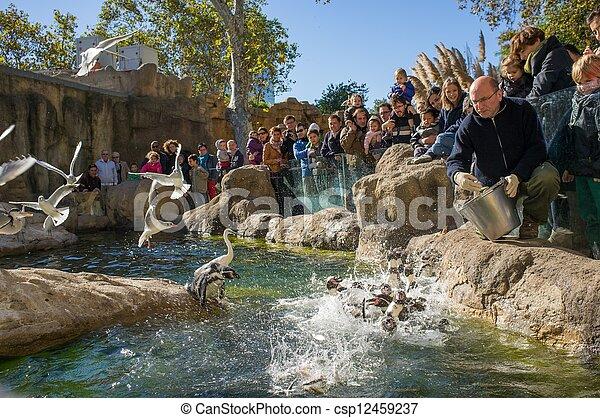 BARCELONA - OCTOBER 28: Feeding penguins in Zoo De Barcelona, on October 28, 2012 in Barcelona, Spain - csp12459237