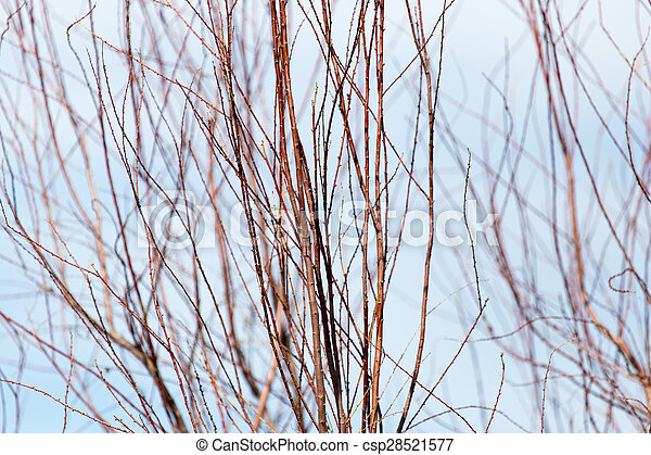 bare branches of a tree against the sky - csp28521577