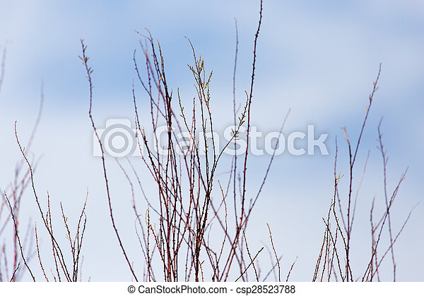 bare branches of a tree against the sky - csp28523788