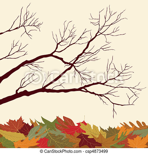 Bare Branches with Fallen Leaves - csp4873499