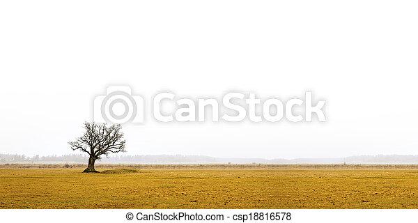 bare oak tree in gloomy landscape - csp18816578