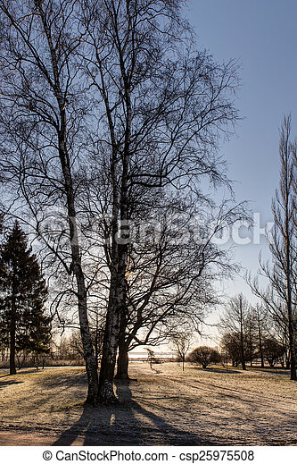 bare spring trees - csp25975508