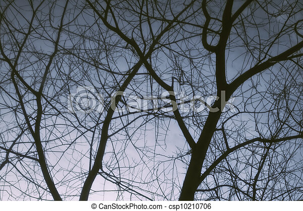 Bare tree branches against the winter dark sky - csp10210706