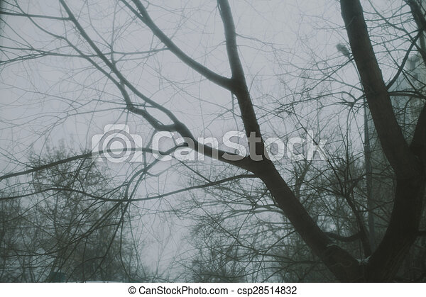 Bare tree branches against the winter dark sky - csp28514832
