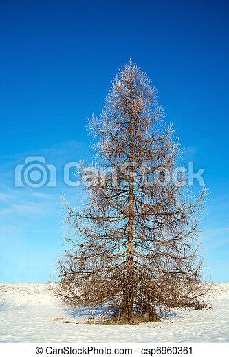 Bare tree in winter - csp6960361