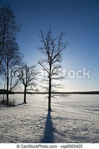 Bare tree in winter - csp6563425
