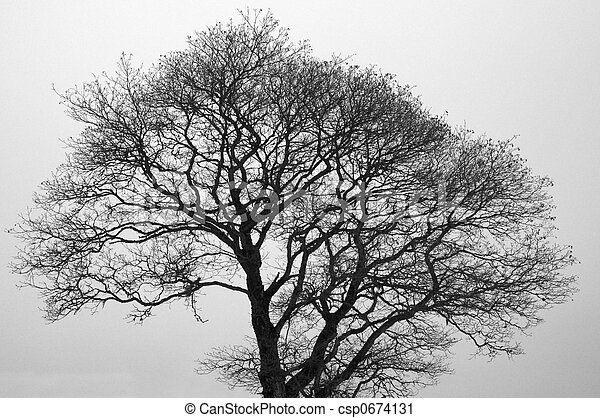 Bare Tree - csp0674131
