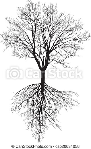Bare tree with roots - csp20834058
