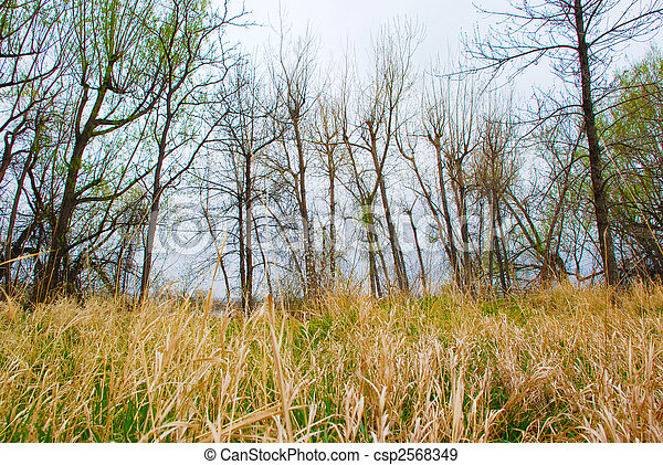 grass field from above. Bare Winter Trees Above A Golden Grass Field - Csp2568349 Grass Field From Above U