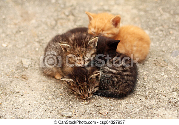 barevný, jinak, čtyři, koty, spací, naházet páté přes deváté, dohromady - csp84327937
