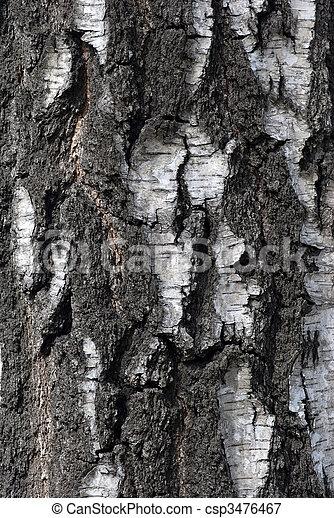 bark of tree - csp3476467