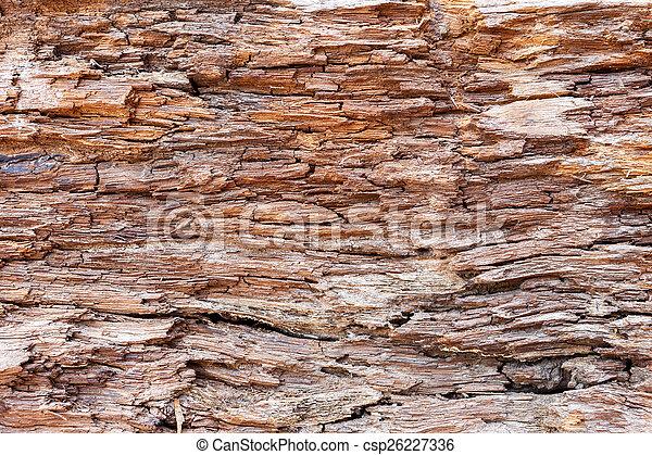 bark wood texture background - csp26227336