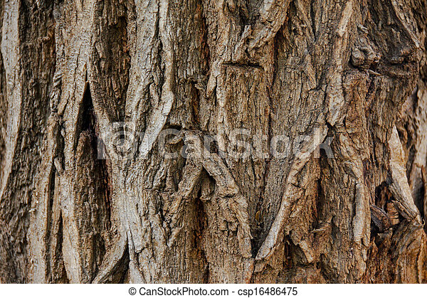 bark wood texture - csp16486475