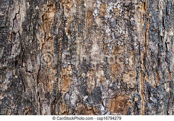 Bark wood texture - csp16794279