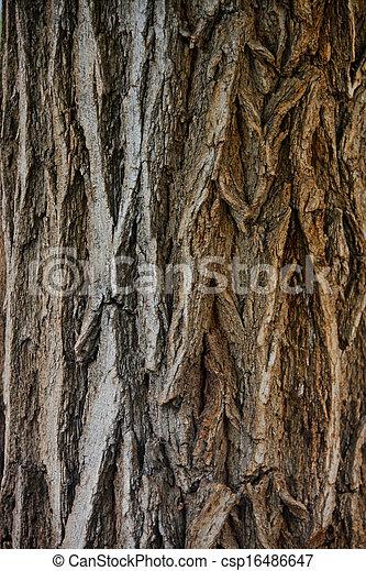 bark wood texture - csp16486647