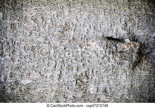 Bark wood texture - csp47215748