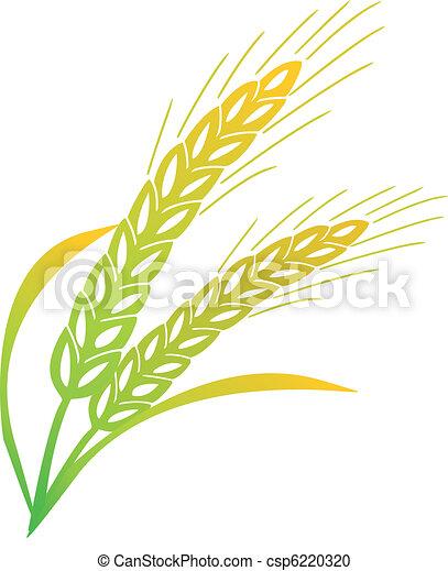 barley - csp6220320