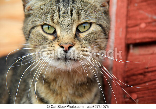 Barn cat with green eyes - csp32784075