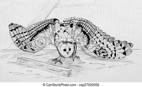 Barn Owl 1 - csp27002058