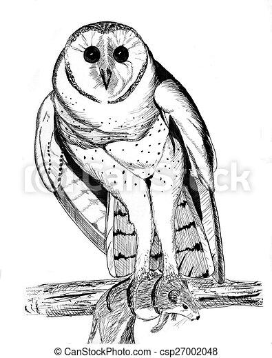Barn Owl 2 - csp27002048