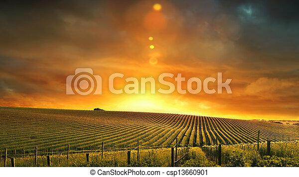 Barossa Sunset - csp13660901