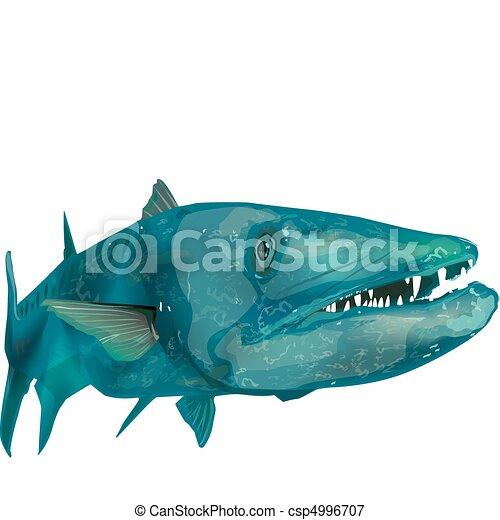 barracuda swimming rh canstockphoto com Barracuda Animal plymouth barracuda clipart