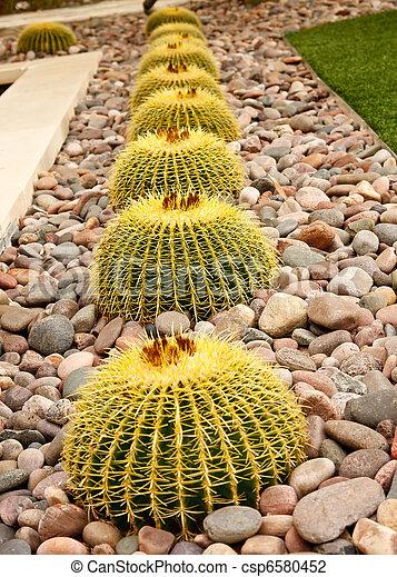 Barrel Cactuses in a Rock Garden - csp6580452