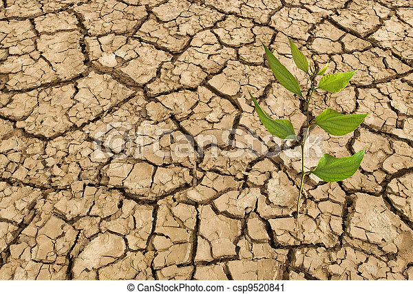Barren land at summer - csp9520841