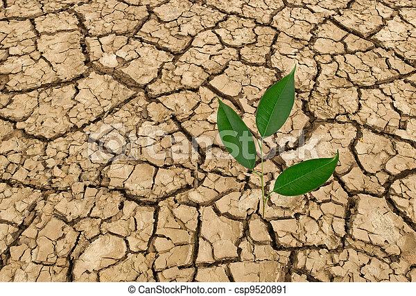 Barren land at summer - csp9520891
