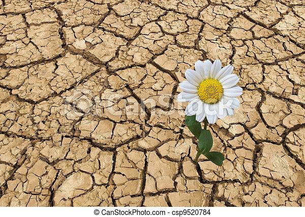 Barren land at summer - csp9520784
