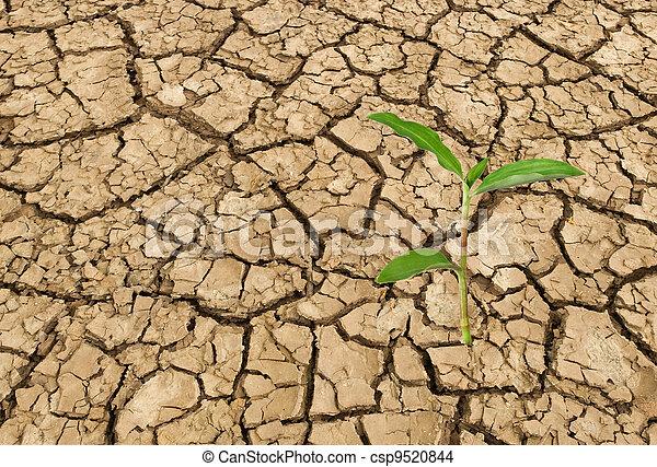 Barren land at summer - csp9520844