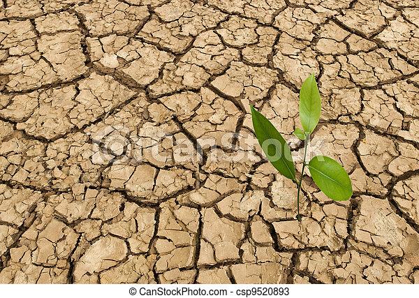 Barren land at summer - csp9520893