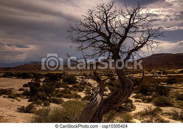Barren southwestern tree - csp10305424