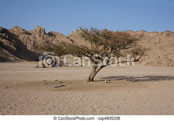 barren tree in the desert - csp4935336