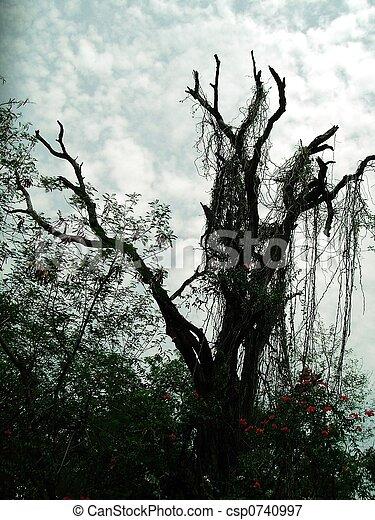 Barren Tree - csp0740997