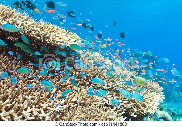 Coral arrecife - csp11441808