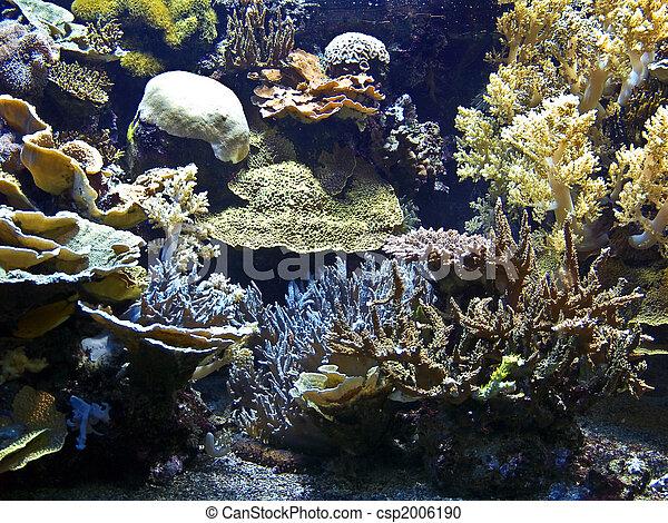 Coral arrecife - csp2006190