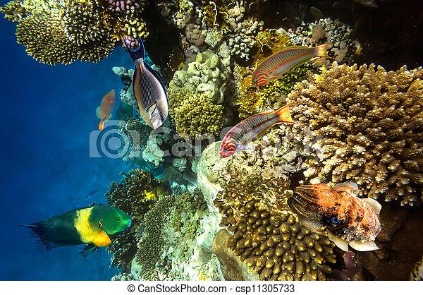 Coral arrecife - csp11305733