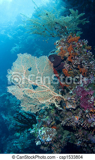 Coral arrecife - csp1533804