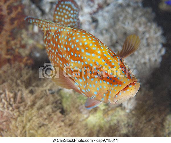 Un grupo coral en un arrecife de coral - csp9715011