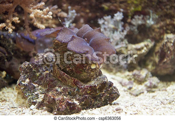 Coral arrecife - csp6363056
