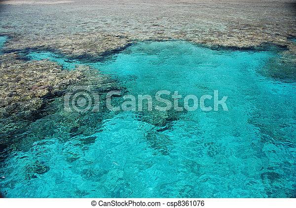 Coral arrecife - csp8361076