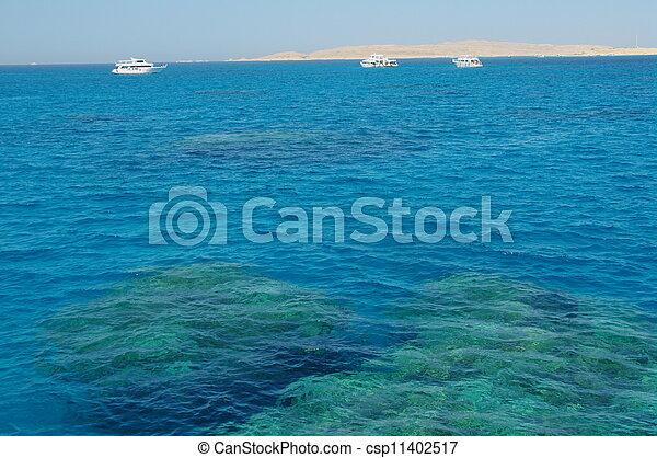 Coral arrecife - csp11402517