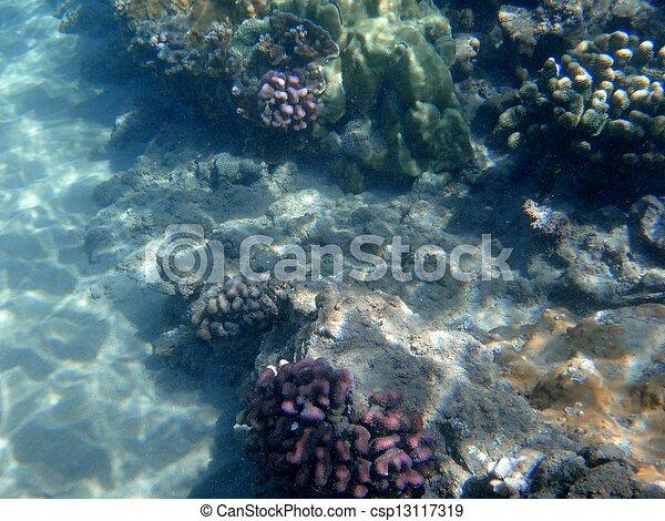 Coral arrecife - csp13117319