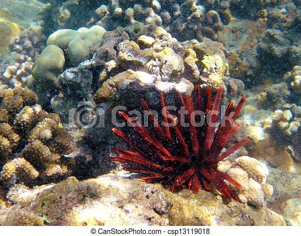 Coral arrecife - csp13119018