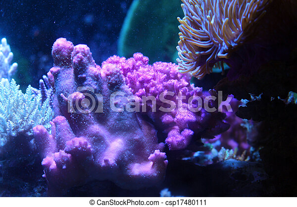 Coral arrecife - csp17480111