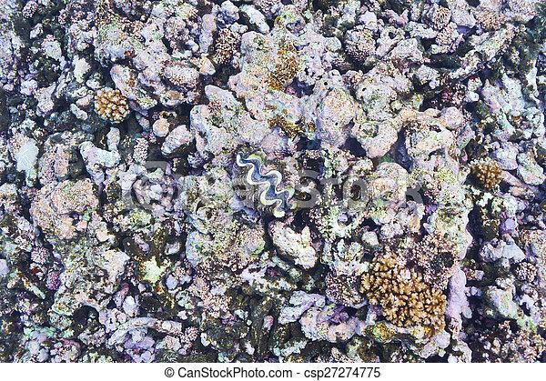Coral arrecife - csp27274775