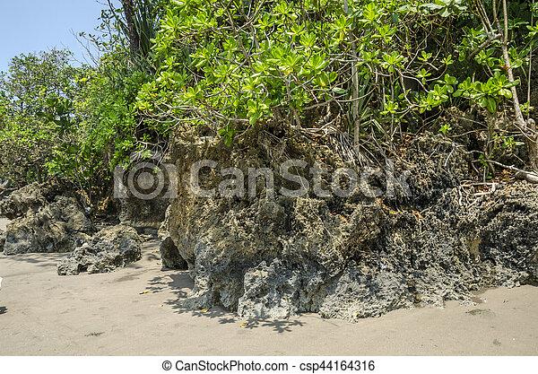 Coral arrecife - csp44164316