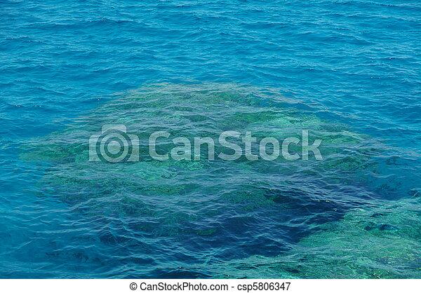 Coral arrecife - csp5806347